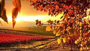 «Арт-Тревел»: солнечные декорации приятного путешествия