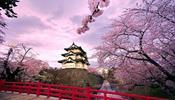 Российские туристы активно бронируют авиабилеты на цветение сакуры в Японии
