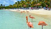 Карибам предрекают ураганное лето