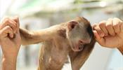 Жестокое обращение с животными в коммерческих целях вредит имиджу Крыма
