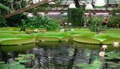 Эмоциональное заседание Комиссии РСТ в Ботаническом саду