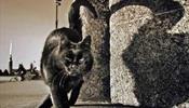 Познакомиться и погладить черного кота
