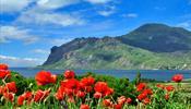 Каждого пятого туриста в Крым намерен отправить «Библио-Глобус»