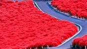 Любование красным прекрасным