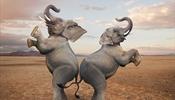 О слоне в лавке внутреннего туризма -