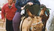 Туристы с избыточным весом угрожают здоровью осликов