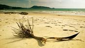 Пляжи Пхукета останутся без шезлонгов