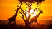 Лучше в Африке –