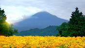 Цветочная сказка у подножия горы Дайсэн -