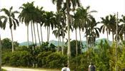 Чтобы увидеть Кубу – оседлать велосипед