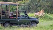 Не пропустите – сафари-экспедиция в Кению класса премиум
