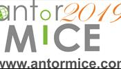 Новый год -  новый MICE ANTOR workshop